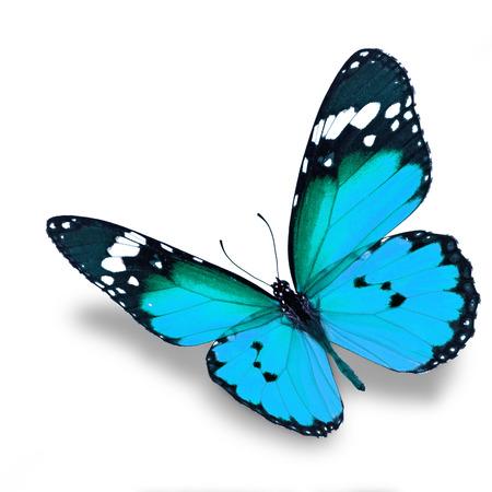 mariposa: Mariposa azul hermoso del vuelo aislado en el fondo blanco