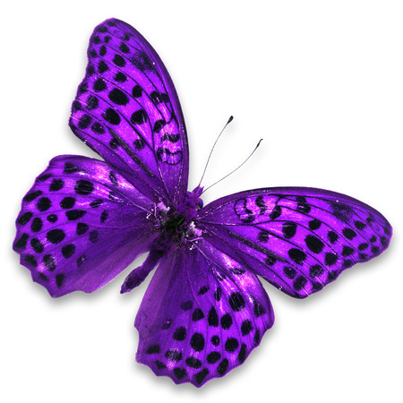 Beautiful purple butterfly isolated on white background.