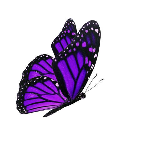 美しい紫色の蝶の分離の白い背景を飛んで