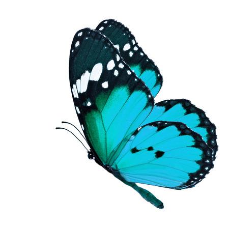 Mooie blauwe vlinder vliegen op een witte achtergrond Stockfoto