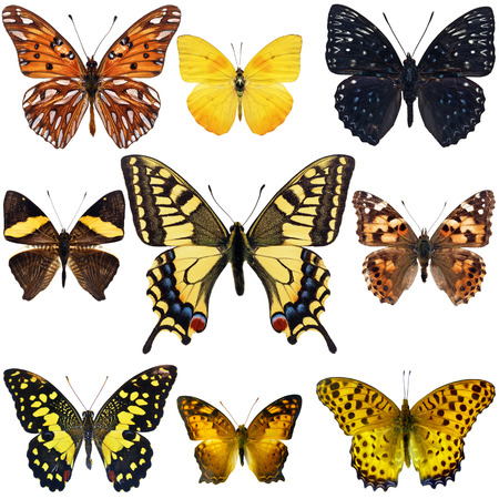 Collection of colorful butterfly isolated on white background photo