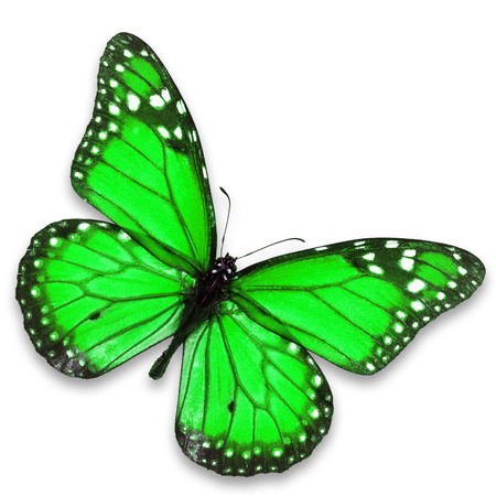 north american butterflies: Beautiful green butterfly isolated on white background.