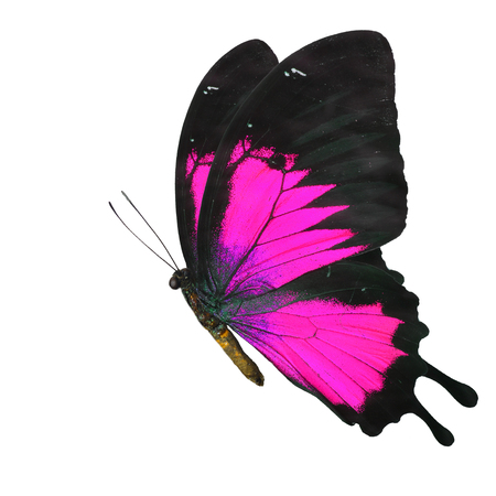 butterfly flying: Beautiful pink butterfly flying isolated on white background