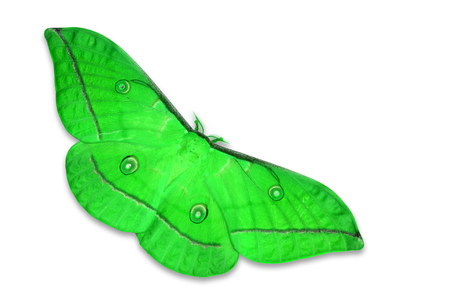 moth: Beautiful green moth isolated on white background