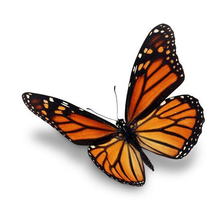 Prachtige monarch vlinder op een witte achtergrond. Stockfoto
