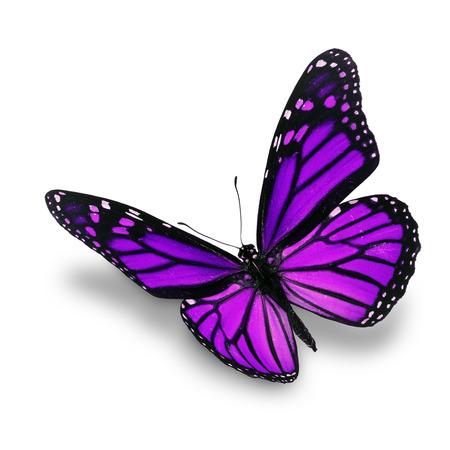 Hermosa mariposa púrpura aislado en el fondo blanco