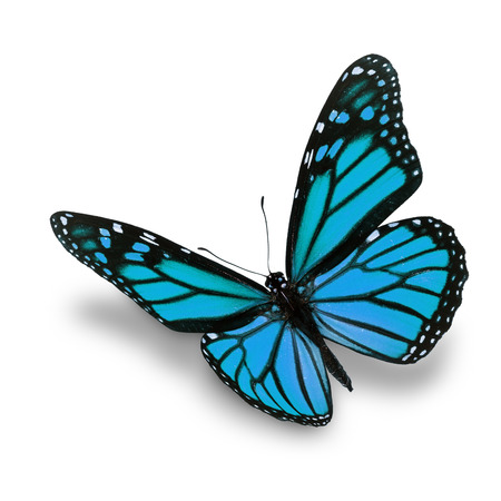 black butterfly: Beautiful blue butterfly isolated on white background Stock Photo