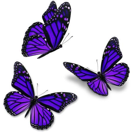 Three purple butterfly, isolated on white background Imagens