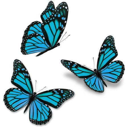 mariposas volando: Tres mariposa p�rpura, aislado en fondo blanco
