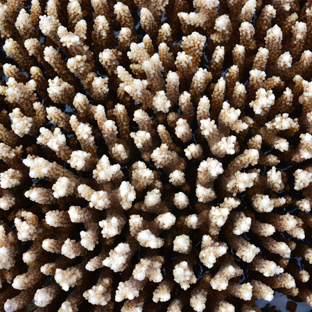 Texture or background formed by the detail of coral photo