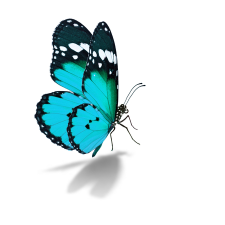 Beautiful colorful butterfly isolated on white background.
