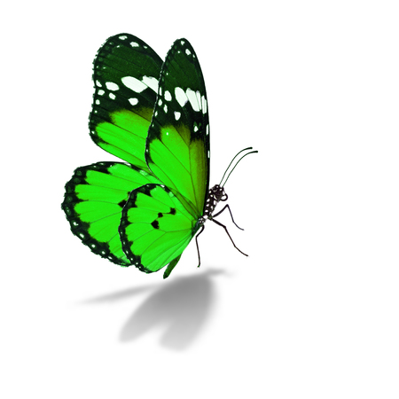 feeler: Beautiful colorful butterfly isolated on white background.