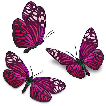 papillon rose: Belle papillon coloré isolé sur fond blanc.