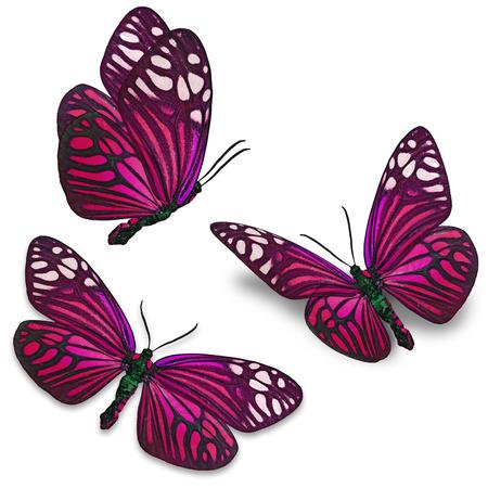rosa negra: Mariposa de colores hermosos aislados en fondo blanco.