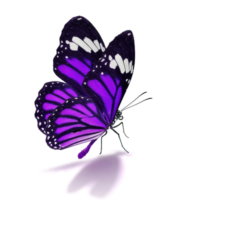purple: Beautiful colorful butterfly isolated on white background.