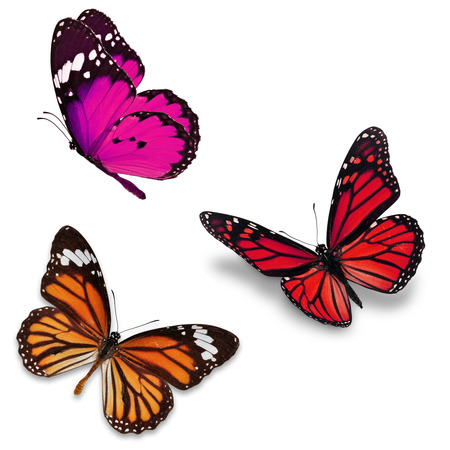 Three colorful butterfly, isolated on white background Imagens