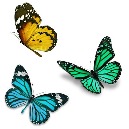papillon: Trois papillon color�, isol� sur fond blanc Banque d'images