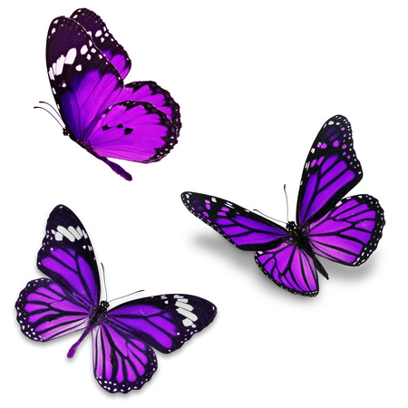 beuty of nature: Three purple butterfly, isolated on white background Stock Photo