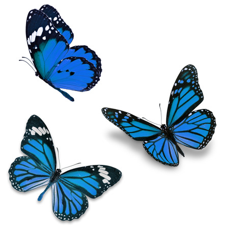 Three blue butterfly, isolated on white background 스톡 콘텐츠