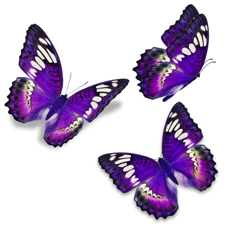 north american butterflies: Three purple butterfly, isolated on white background Stock Photo