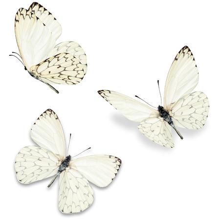 mariposas volando: Tres mariposa blanca, aislado en fondo blanco Foto de archivo