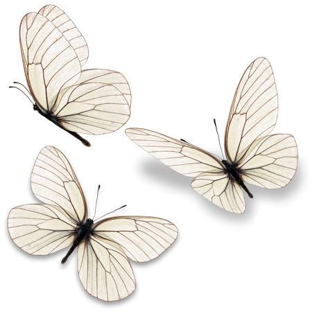 白い背景に分離された 3 つの白い蝶