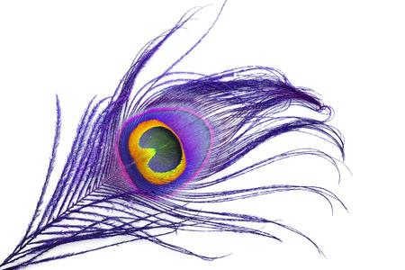 Macro of peacock feather eye on white background
