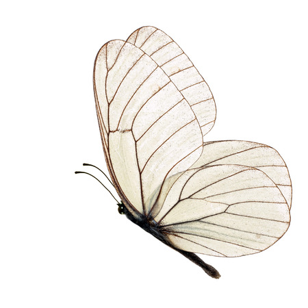 white butterfly isolated on white background Foto de archivo