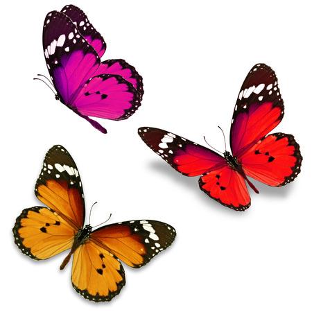 mariposas amarillas: Tres mariposa de colores aislados sobre fondo blanco Foto de archivo