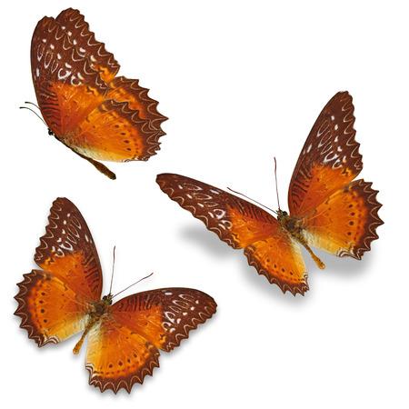 mariposa: Tres mariposa de color naranja aislada sobre fondo blanco