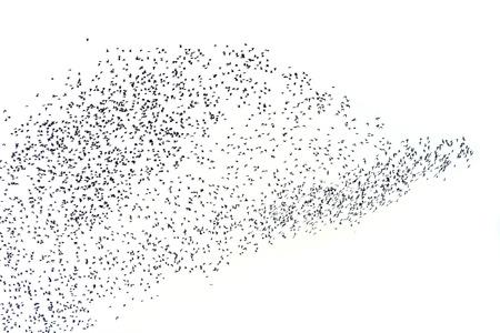 bandada de p�jaros: Siluetas p�jaros que vuelan en el fondo blanco