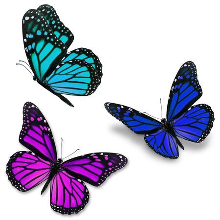 purple: Tres colorida mariposa monarca aisladas sobre fondo blanco