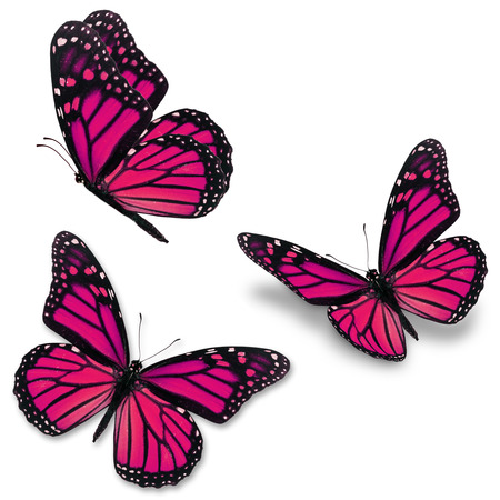 Three pink monarch butterfly, isolated on white background Stock Photo