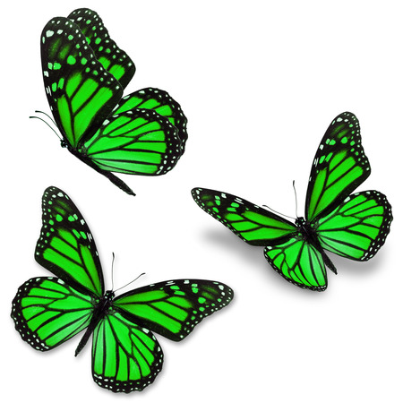 north american butterflies: Three green monarch butterfly, isolated on white background