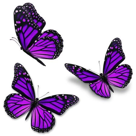 Three purple monarch butterfly, isolated on white background Zdjęcie Seryjne