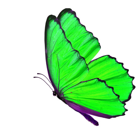 green butterfly: Beautiful green butterfly flying isolated on white background Stock Photo