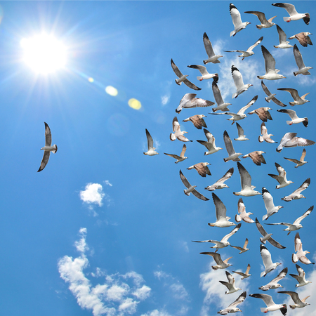 business symbols and metaphors: a group of flying seagull birds with one individual bird going in the opposite direction with blue sky background.