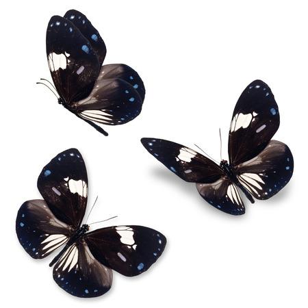 美しい 3 つの黒と白い蝶が白い背景で隔離。