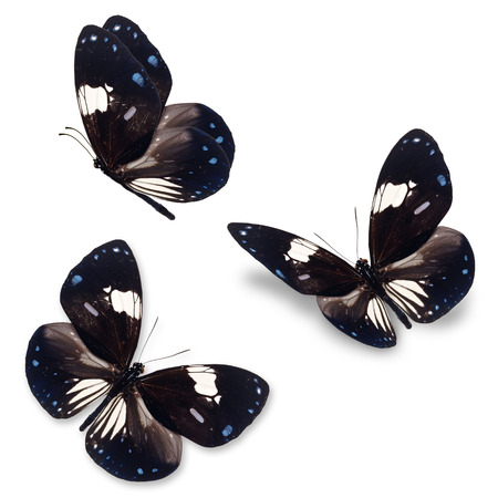 butterfly isolated: Beautiful Three Black and white butterfly isolated on white background.
