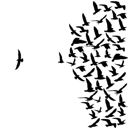 silhouette group of flying seagull birds with one individual bird going in the opposite direction white background. Foto de archivo