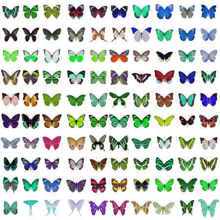 red winged: Collection of 100 butterfly and moth isolated on white background