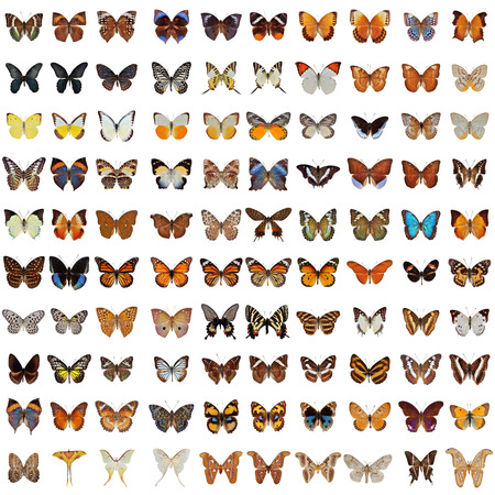 Collection of 100 butterfly and moth isolated on white background