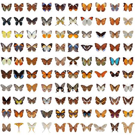 Collection de 100 papillon et papillon isolé sur fond blanc Banque d'images - 48563039