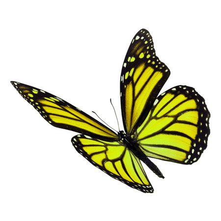 Beautiful yellow monarch butterfly flying isolated on white background Foto de archivo