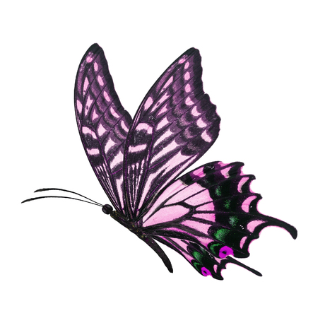 butterfly flying: Beautiful purple butterfly flying isolated on white background
