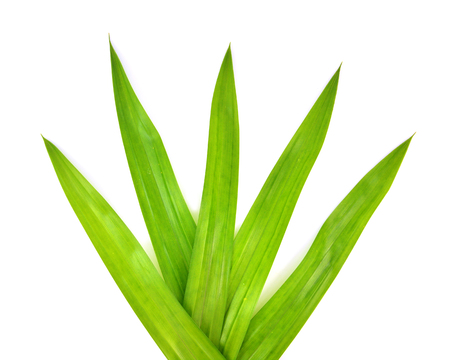 fragrant: Pandanus Palm, Fragrant Pandan, Pandom wangi isolated on white background