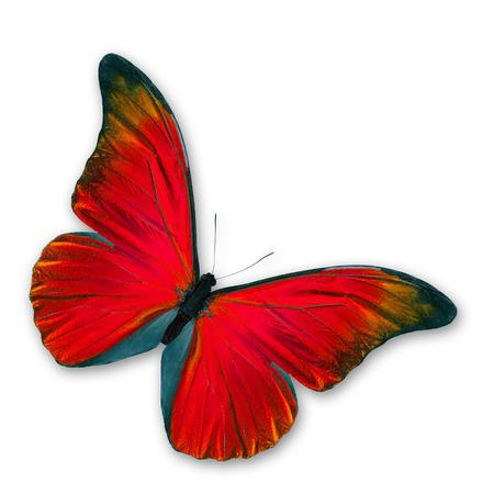 赤い蝶の飛行の分離の白い背景