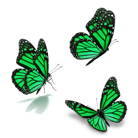 green butterfly: Beautiful three green monarch butterfly, isolated on white background Stock Photo