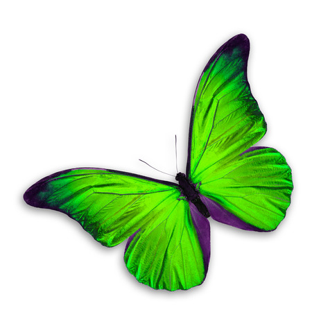 green butterfly: Green Butterfly flying, isolated on white background Stock Photo