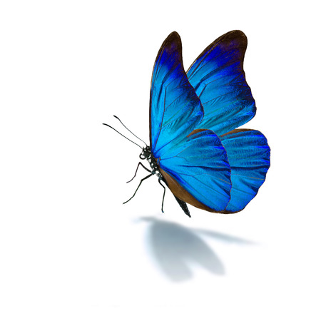 Beautiful blue butterfly isolated on white background 版權商用圖片
